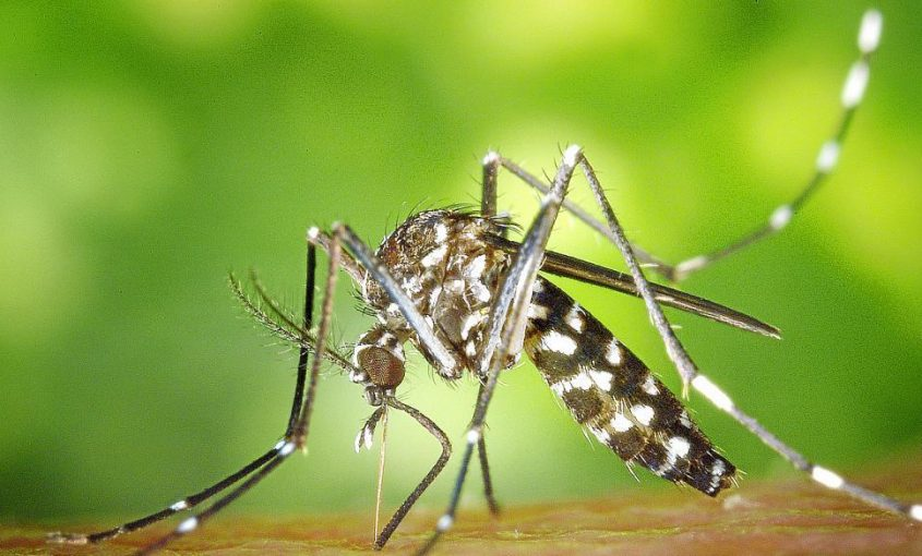 alt-picaduras-insectos-farmacia-pabellones-militares